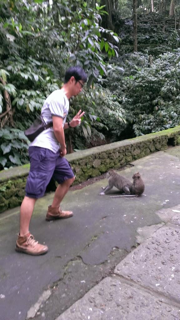 烏布附近的聖猴森林。猴子太白目,應降級稱為猴子森林就好。